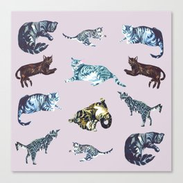 Little cats Canvas Print