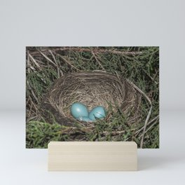 Robins nest with eggs Mini Art Print