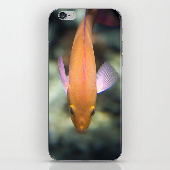 O-Fish-Al iPhone & iPod Skin