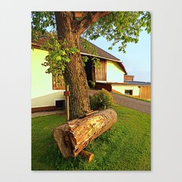 Tree trunk bench on a summer evening   landscape evening Canvas Print