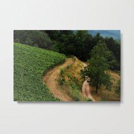 Vineyard Path Metal Print
