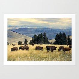 National Parks Bison Herd Art Print