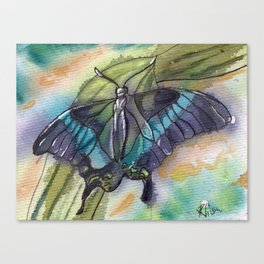 Butterfly Bamboo Canvas Print