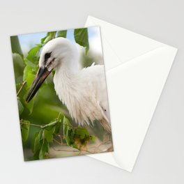 Orphaned one White Stork Stationery Cards