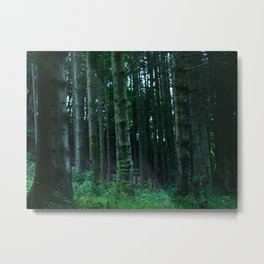 Scottish Woodland  Metal Print