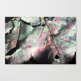 ANOTHER  ANOTHER ANOTHER LEAF - UNEDITED (sharpened a 16% is all) Canvas Print