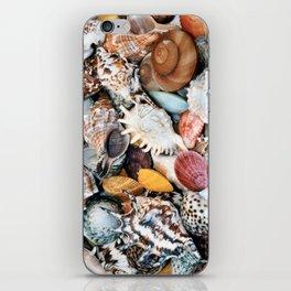 Colorful Seashells iPhone Skin