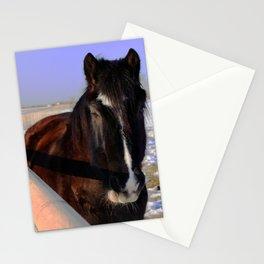 Mahogany Bay Draft Horse Stationery Cards