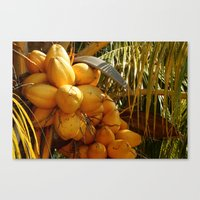 coconut wishes Canvas Prints featuring Coconut by William Klein