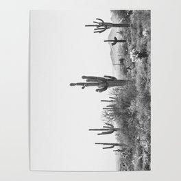 DESERT / Scottsdale, Arizona Poster