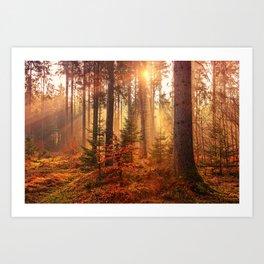 Autumn Landscape Forest Photograph Art Print