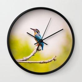 Kingfisher Bird on a Branch Wall Clock