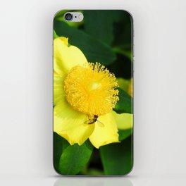 Bursts of Yellow iPhone Skin