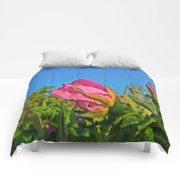 Cape rose at the Beach Comforters