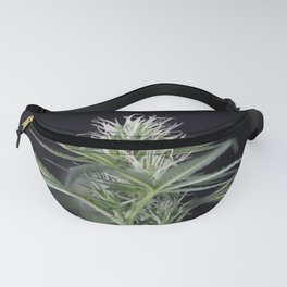 Cannabis Marijuana Flower Early Stage Fanny Pack