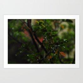 Rain // Leaves Art Print