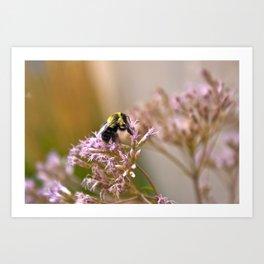 Bee Pollen II Art Print