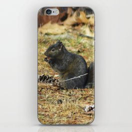 Black Squirrel Eating Pine Cones iPhone Skin