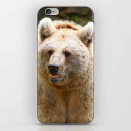 Syrian Brown Bear iPhone Skin