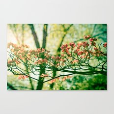 In the Limelight Canvas Print