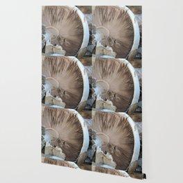 TEXTURES -- Mushroom Uprooted Wallpaper