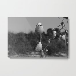 Dangling from Driftwood Metal Print