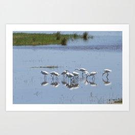 Flock of Snowy Egrets at Chincoteague No. 1 Art Print