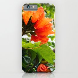 The beautiful red flowers of the African Tulip Tree iPhone Case