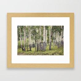 Aspen Stand Framed Art Print