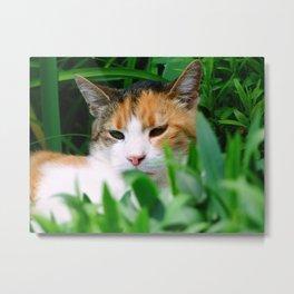 Cats look Metal Print
