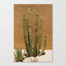 Cabo Cactus II Canvas Print