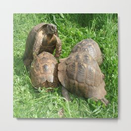 Bullied into Submission - Mating Tortoises Metal Print