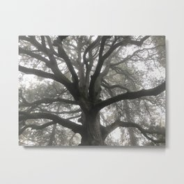 Morning Branches Metal Print