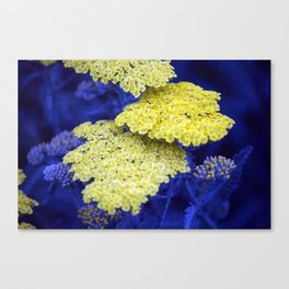 Longwood Gardens - Spring Series 129 Canvas Print