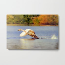 """On the Run""  - Mute Swan Metal Print"