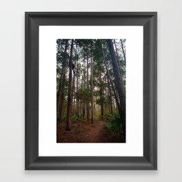 Walking Through the Tall Trees Framed Art Print