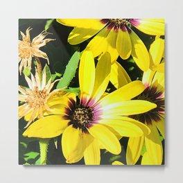 Crazy Daisies in Bright Sunshine Summer Fun Yellow Metal Print