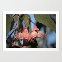 Bee is for Blossom Art Print