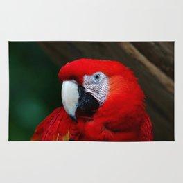 Scarlet Macaw Bird Rug