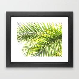 Palm leaves tropical illustration Framed Art Print