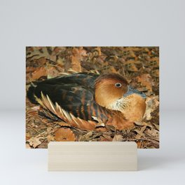 Fulvous Whistling Duck Mini Art Print