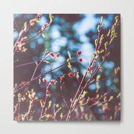Berries at the Lake  Metal Print