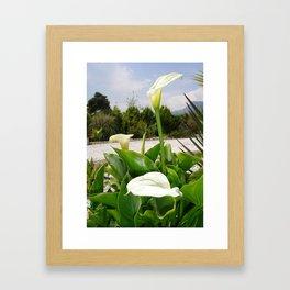 Three Cream Calla Lilies With Garden Background Framed Art Print