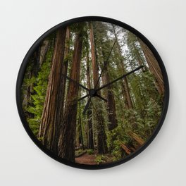 Redwood Forest Adventure VII - Nature Photography Wall Clock