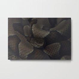 Viper Metal Print