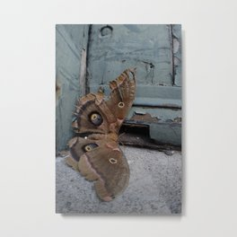 Moth Mother Metal Print
