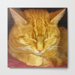 Sleeping Tom Metal Print