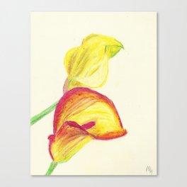 Pastel Calla Lilies Canvas Print