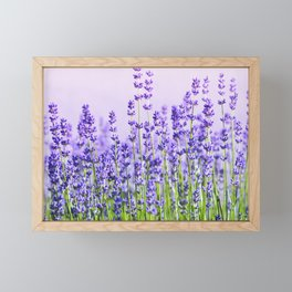 Lavender 15  Framed Mini Art Print