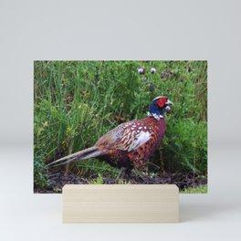 pheasant Mini Art Print